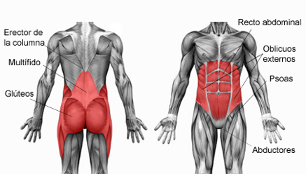 muscoli core